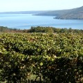 undiscovered wine regions Finger Lakes - Vineyards  - Ontario_Finger Lakes Regional Tourism Council