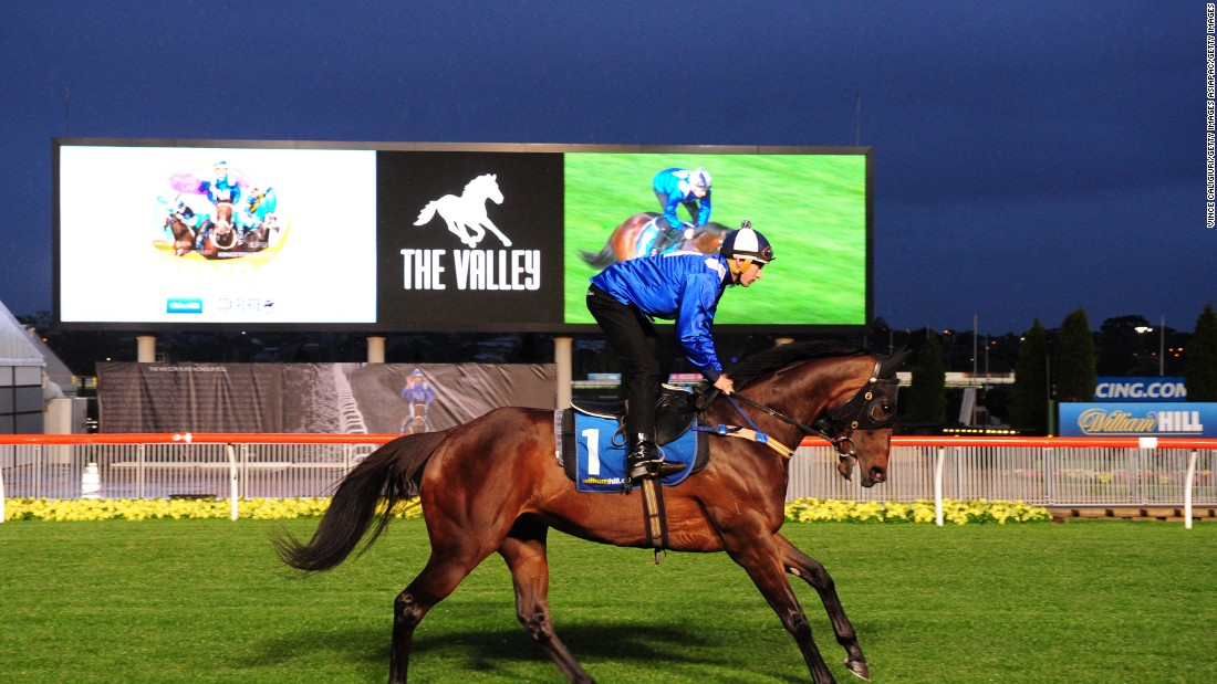 Australia's Winx won all eight of her starts in 2016.  She is riding a 13-race winning streak going back to May 2015.  <br />