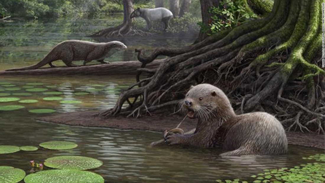 "The discovery of a species that lived 6.6 million years ago in southwestern China suggests that <a href=""http://www.cnn.com/2017/01/24/asia/china-ancient-otter/index.html"">ancient otters </a>had ""wolf-like"" proportions, and weighed roughly 100 Ibs. The creature -- whose skull was excavated in Yunnan province -- would have been twice the size of today's otters."