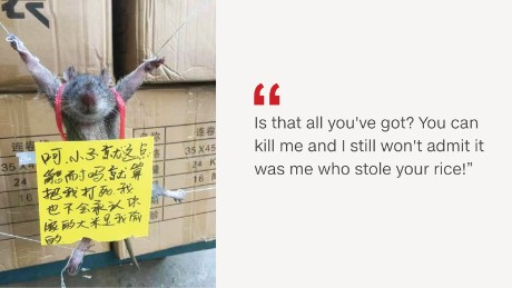 Photos of the rat were widely shared on Chinese social media.
