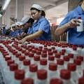 china moutai production-10