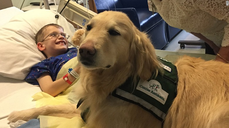 Casper the therapy dog needs therapy