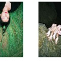 Ren Hang artwork 12