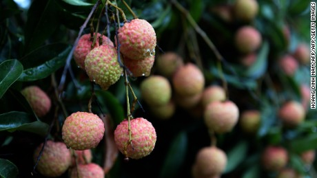 Unripe lychees contain toxins that can cause extremely low blood sugar.