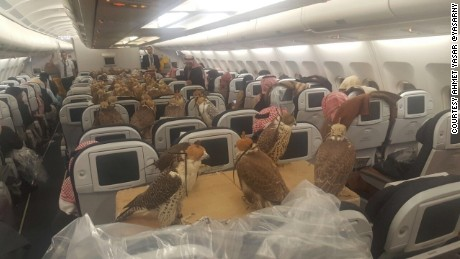 Ahmet Yasar posted this viral photograph of tens of falcons and says they were traveling to Jeddah in Saudi Arabia.