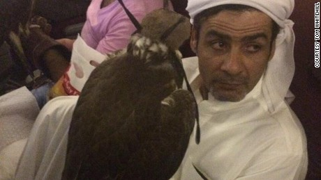 Qatar, Etihad, Emirates and Royal Jordanian Airlines allow falcons in their cabin area.