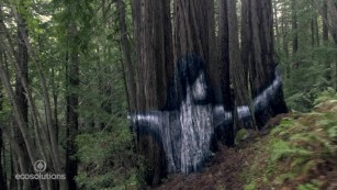 Stunning mural appears in secret forest