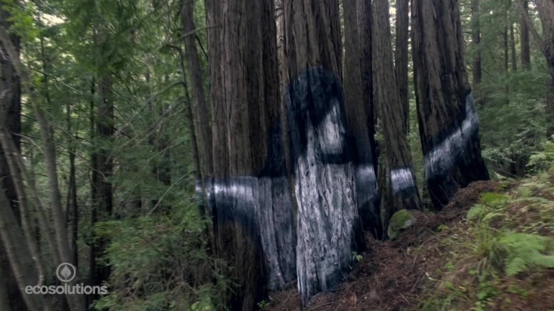 Stunning mural appears in secret forest - CNN.com