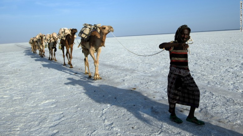 An Afar man, the people who live in the Danakil region, leads a line of camels along the salt plains.