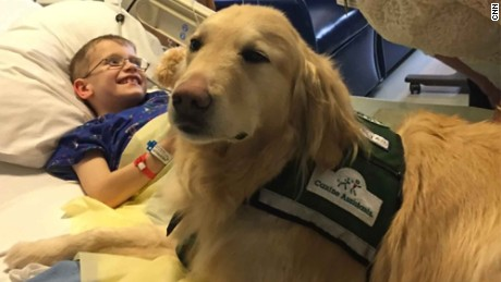Image result for The mysterious science behind life saving dogs