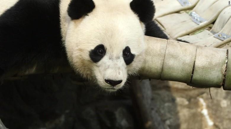 Resultado de imagen para bao bao panda