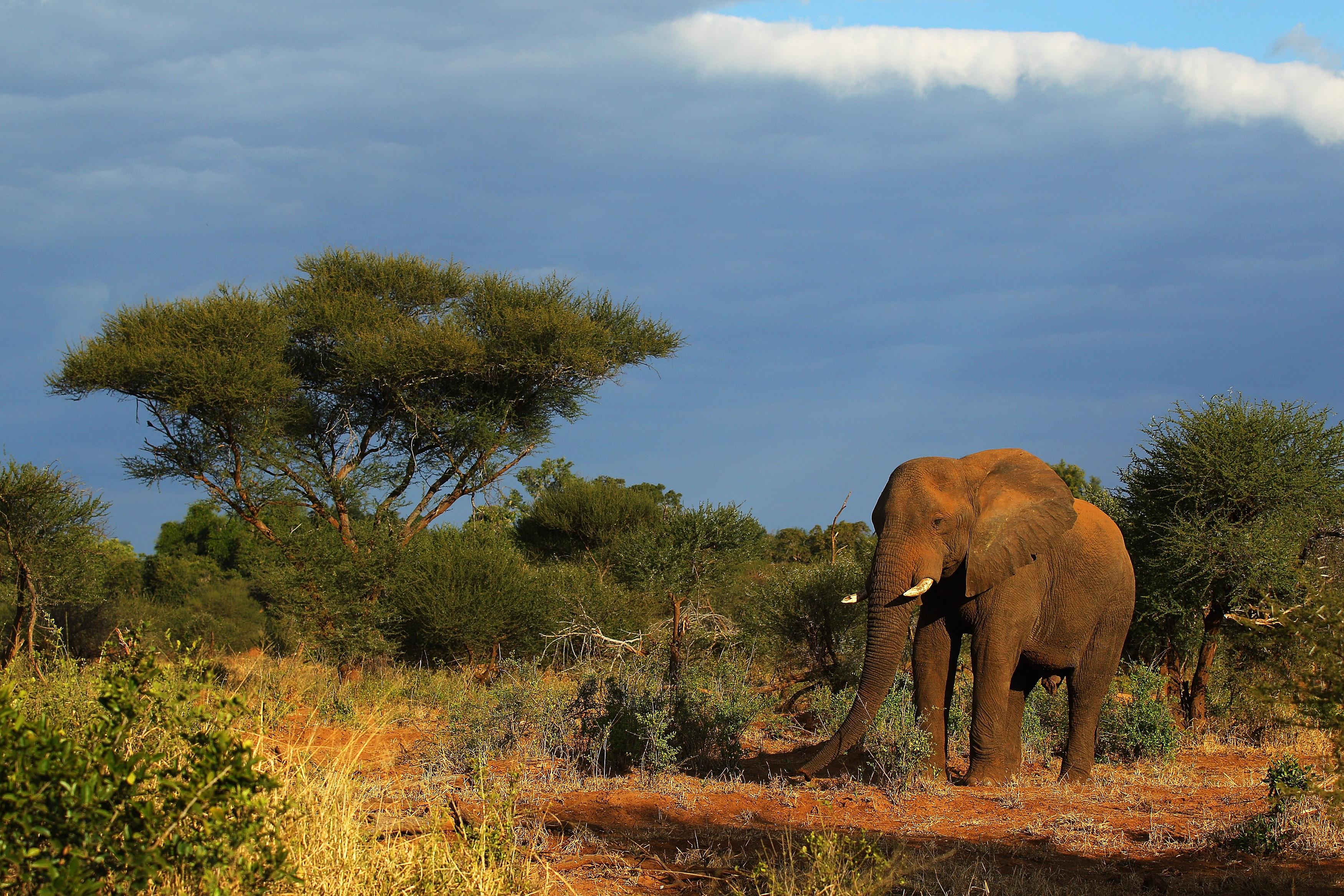African Mountain Animals -