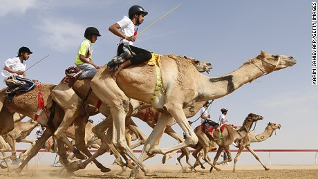 Jockeys compete in a camel race during the Sheikh Sultan Bin Zayed al-Nahyan heritage festival, held at the Shweihan racecourse in Al-Ain, on the outskirts of Abu Dhabi, on February 10, 2017.