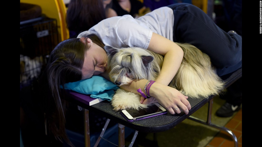 "Kristen Riddley rests with a Chinese Crested Powder Puff in the benching area. When a competition is ""benched,"" ticket-holders from the general public are allowed access to interact with the dogs and their owners."