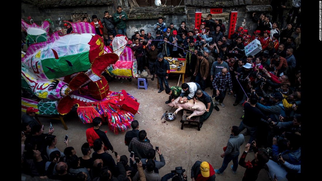 Villagers in Gutian, China, sacrifice a pig before a Lantern Festival parade on Saturday, February 11.