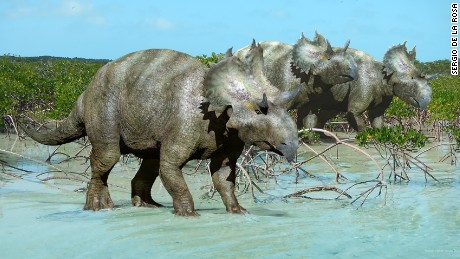 Researchers in Mexico have uncovered a new species of horned face dinosaur that lived 73 million years ago