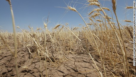 "HERMLEIGH, TX - JULY 27:  A drought-stricken wheat field bakes in the sun July 27, 2011 near Hermleigh, Texas. A severe drought has caused the majority of dry-land (non-irrigated fields) crops to fail in the region. The past nine months have been the driest in Texas since record keeping began in 1895, with 75% of the state classified as ""exceptional drought"", the highest classification.  (Photo by Scott Olson/Getty Images)"