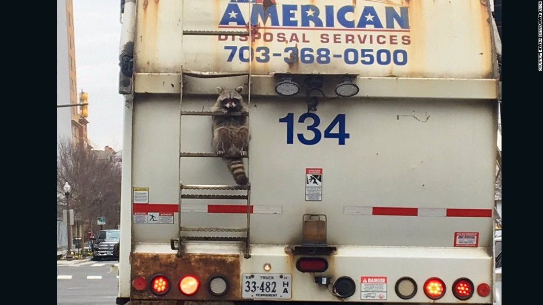 "Politico reporter Helena Bottemiller Evich <a href=""https://twitter.com/hbottemiller/status/832625044140474368"" target=""_blank"">tweeted this photo</a> of a raccoon holding on to the back of a garbage truck in Arlington, Virginia, on Friday, February 17. She alerted the truck driver, and police responded to the scene. The raccoon <a href=""http://www.cnn.com/2017/02/17/us/raccoon-stuck-on-garbage-truck/"" target=""_blank"">was later released</a> in a nearby park."