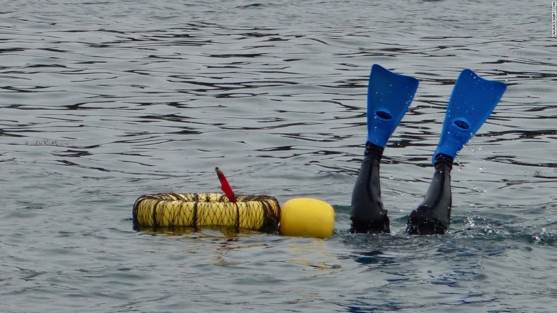 <strong>A weighty task: </strong>As the ama divers descend, their blue, yellow and green fins are the last thing to disappear into the sea. The women on this team typically dive from 33-50 feet in depth. They tie heavy weights around their waists to help them descend quicker.