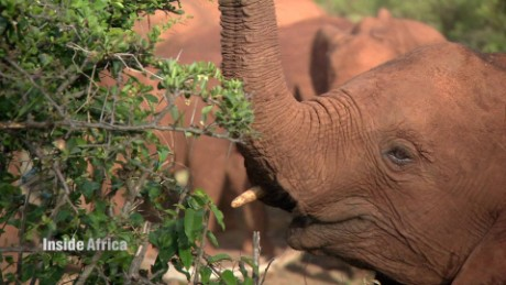 How to save orphan elephants