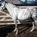 horse hairdresser zebra
