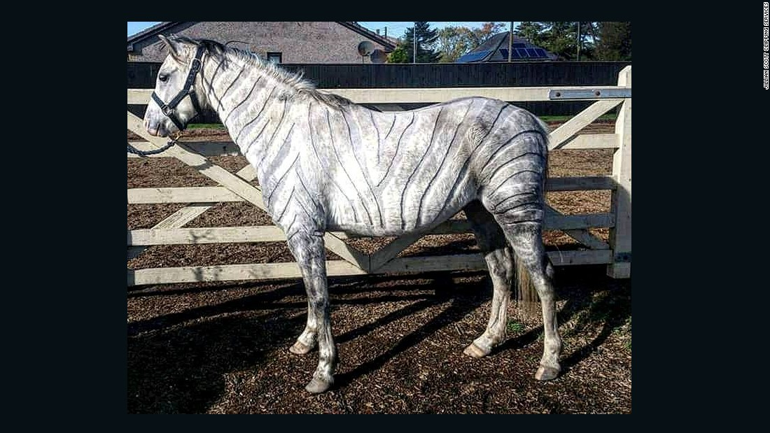 """""""My first full body custom was the zebra clip on my little Welsh pony,"""" Scott recalls. """"It helped him stay cool enough not to sweat during work, but also not to be too chilly during warm up/ cool down phases of exercise."""""""