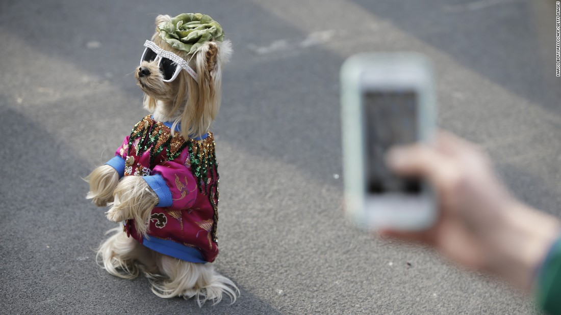 A dog wears sunglasses in the street before a Gucci fashion show in Milan, Italy, on Wednesday, February 22.