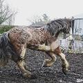 horse hairdresser scales