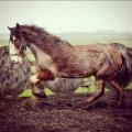 horse hairdresser scales 2