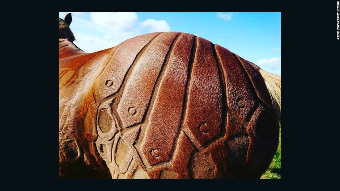"""Most of Scott's horses are happy to be clipped, as the process is a regular winter routine. """"Some even really enjoy it and make faces or groom me if I reach a tickly or itchy spot,"""" she adds.<br />"""
