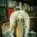 horse hairdresser bow