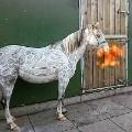 horse hairdresser dragon