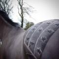 horse hairdresser stars and stripes 2