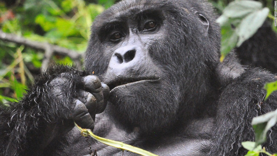 <strong>Find Africa's gorillas in the rain: </strong>Gorilla trekking in Uganda during rainy season may save you some money and, at the same time, help to get the crowds away from your perfect shot.<br />