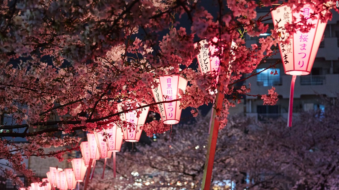 <strong>Meguro River, Tokyo:</strong> The cherry trees that hang over the Meguro River in Tokyo's Nakameguro district add to the area's beauty. During cherry blossom season vendors set up stalls selling food, beer and pink Champagne.
