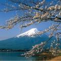 Cherry blossoms Mt Fuji