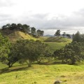 Restricted Mangere Mountain