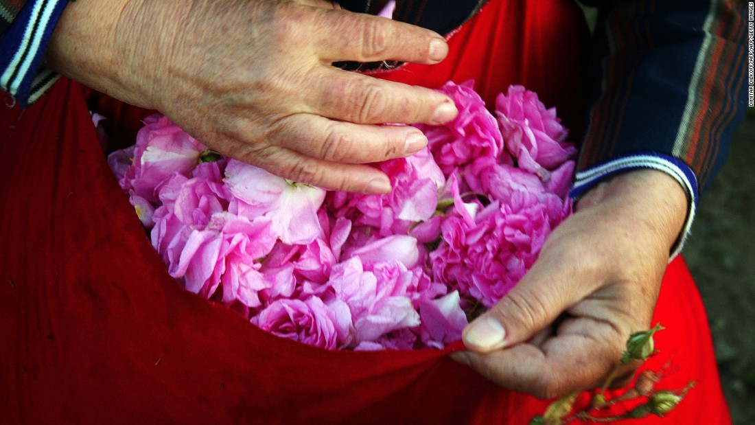 A Bulgarian woman holds a bag filled with picked rose petals in the Valley of Roses, near the town of Karlovo, in central Bulgaria. Its mild climate has made Bulgaria, along with Turkey and Morocco, one the world's three largest producers of rosa damascena, whose oil is a much-wanted perfumery substance.
