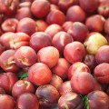 nectarines STOCK