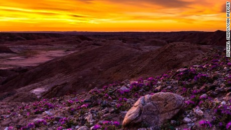 Michael Zandy says he took this photo at sunrise on Saturday in the Anza-Borrego Desert State Park.
