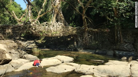 Meghalaya's living bridges are made with tree roots and rocks.