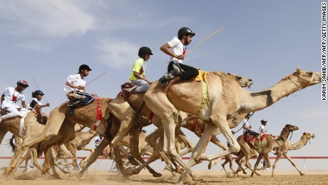 Jockeys compete in a camel race during the Sheikh Sultan Bin Zayed al-Nahyan heritage festival, held at the Shweihan racecourse in Al-Ain, on the outskirts of Abu Dhabi, on February 10, 2017. The festival includes a camel beauty contest, a traditional souq, a camel auction, and competitions for traditional handicrafts. / AFP / KARIM SAHIB        (Photo credit should read KARIM SAHIB/AFP/Getty Images)