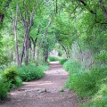 Things to do in Austin Barton Creek Trail