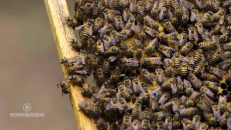 vietnam beekeepers_00004212.jpg