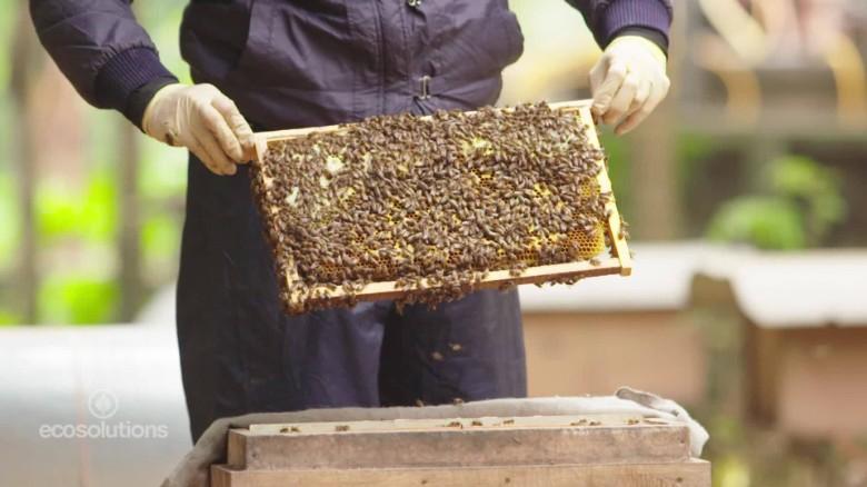 vietnam beekeepers_00033112