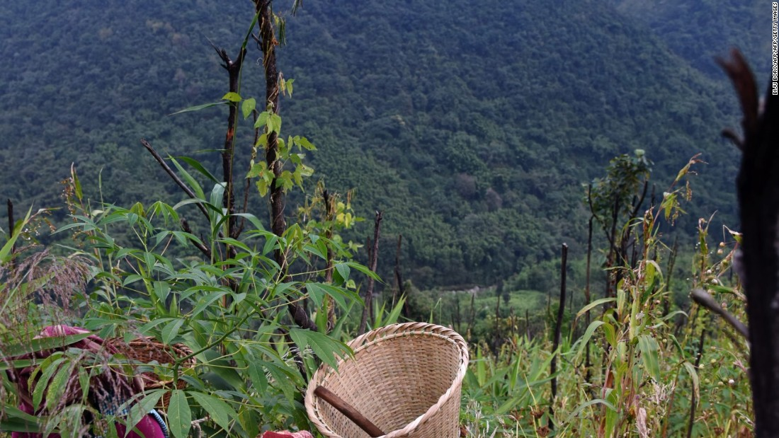 <strong>Nongtraw: </strong>A Khasi woman collects herbs in a field in the mountainous Meghalaya village of Nongtraw, located about an hour from the capital.
