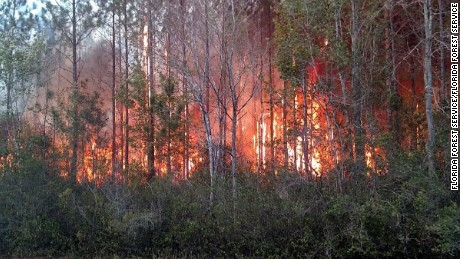 At least 10 structures were destroyed in a wildfire in Nassau County, FL Wednesday, according to a series of tweets on the Florida Forest Services verified Twitter account.