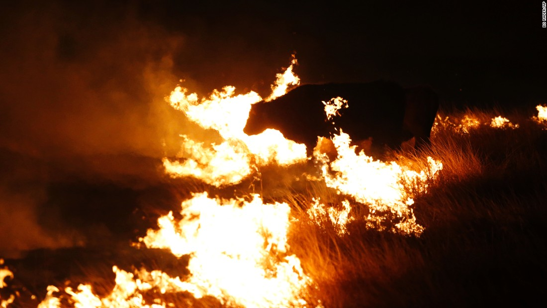 "A cow grazes by a wildfire near Protection, Kansas, on Tuesday, March 7. <a href=""http://www.cnn.com/2017/03/07/us/wildfires-texas-deaths/"" target=""_blank"">Wildfires across the country</a> had consumed more than 1 million acres by Tuesday night. Other states affected were Colorado, Florida, Oklahoma and Texas."