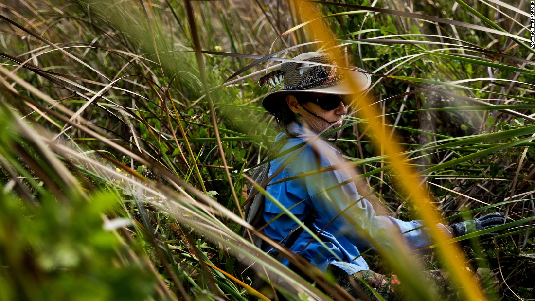 Donna Kalil slowly makes her way through thick grass as she hunts for pythons on Thursday, March 30, in Homestead, Florida. She was among a group working to rid Everglades National Park and surrounding areas of the non-native species of pythons that eats vegetation and preys on wildlife.
