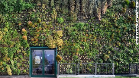 Vertical gardens like this one on a shopping mall facade in the town of Rozzano, near Milan in Italy are increasingly important for established cities.